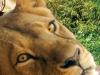 Loewe_Bootsfahrt_Erlebnis-Zoo_Hannover_300dpi_900