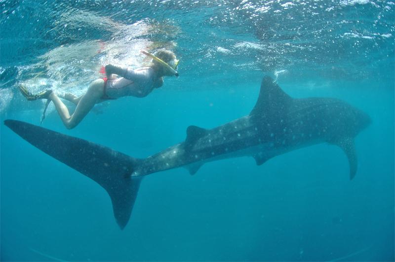 Walhai und Elischeba in Kenia