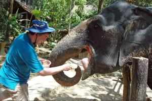 elefanten_fttern_kinder
