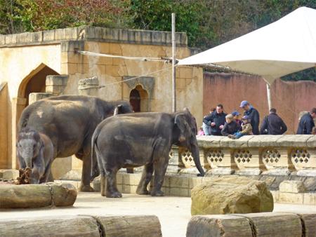 elefanten_in_deutschland