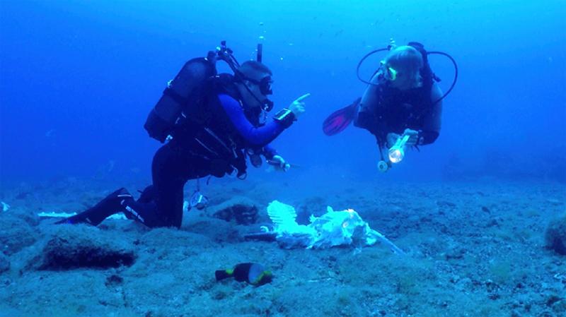 skelett800_300dpi_800